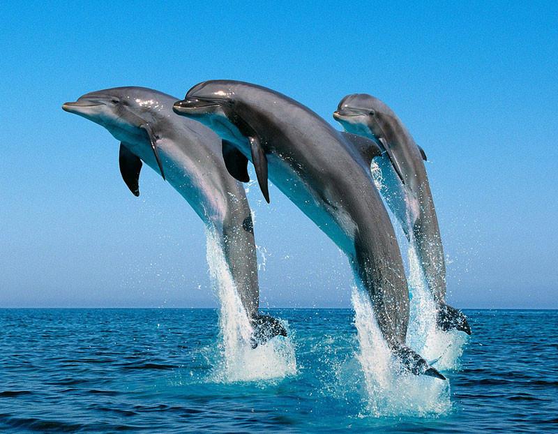 イルカのイメージ画像