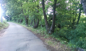 たくさんのクヌギの木