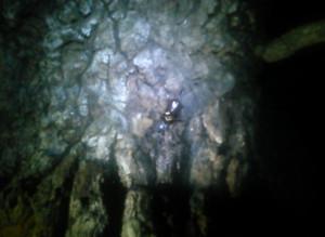 木につくカブトムシ(夜)
