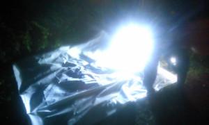 ライトで虫をおびき寄せている画像